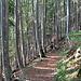 Abstieg nach Hinters Schwandi durch den schon herbstlichen Wald