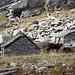 <b>L'Alpe Ruscada comprende tre corti: il più alto, che da solo meriterebbe l'escursione, è chiamato Corte di Cima di Ruscada (1755 m). </b>