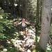 steil durch den Wald auf kaum erkennbaren Trittspuren