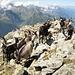 """Ziegen auf dem Nordwestgrat - wie wir unterwegs erfahren haben, sind diese dem Alphirten """"abgehauen"""" und warten jetzt darauf, wieder eingefangen zu werden :-)"""