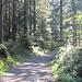 Waldweg auf dem Pfänderrücken