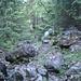 Waldiger Aufstieg