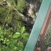 Puente Los Mallos über eine vielleicht 10m breite Schlucht, aber da gehts gut 200m runter.