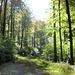 Herrliche sonnendurchflutete Waldwege im Süntel