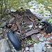 Noch ein automobiles Relikt! Angespült bei irgendeinem Hochwasser und seither unbeachtet, rostet dieses ehemalige Schmuckstück vor sich hin.