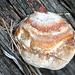 Ein junger Baumpilz, nur 4 cm Durchmesser