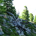 Die Waldgrenze erreicht hier rekordverdächtige 2400 M.ü.M.