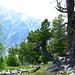 Arven und Lärchen Wald bis auf eine Höhe von 2400m