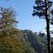 Hörnli, vom Chlihörnli aus gesehen. Man sieht gut, dass das Gipfelplateau von teils senkrecht abfallenden Nagelfluhwänden getragen wird