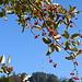 Es wird Herbst am Hörnli