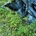 Giardinetti spontanei