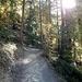 Durch den schönen Herbstwald