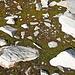 Aus dem Leben eines Gletschers, Teil 6: Das, was er zurücklässt, wird bald wieder von der Vegetation in Beschlag genommen. Ein ewiges Hin und Her, Werden und Vergehen.