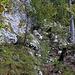 Bännli Westgrat:<br /><br />Oberhalb der Couloirs erreicht man wieder Fels den man von rechts unten her erkraxelt (I).