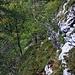Bännli Westgrat:<br /><br />Der dritte Fels oberhalb der Couloirs kann man südseitig auf Pfadspuren umgehen und erreicht so nach einem Felstürmchen wieder den Grat.