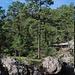 Schöne Nadelwälder
