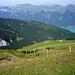 Der Aufstieg den Westrücken des Tschingel am Zaun entlang - unten die Chüemad-Alpe.