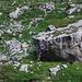 In der nähe des Fählensees liegen einige Blöcke die zum Bouldern einladen.