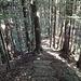 Es geht abwärts durch den Wald