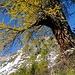 Herbstfarben II - hinten das Glegghorn.