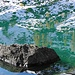 Spiegelungen im See.