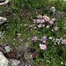 Enchantement floral sous la cabane du Dom