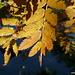 Magico autunno!
