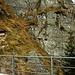 Beim grasigen Balkon oberhalb des Felsens bei der Brücke P.1677m über den Rein da Nalps musste ich hochkraxeln um die Vermessungstafeln hoch zu halten.