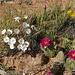 Deserto fiorito!