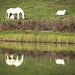 Seepferde im und am Etang de la Plaine