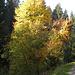 Herbst, Herbst