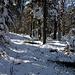 Sogar ein Mountenbiker war hier unterwegs.<br />Zum Kleinen Kranzberg ginge es hier rechts ab, ich breche den Weiterweg ab, da die schmale Wegspur kaum mehr erkennbar ist und unterm Schnee sehr rutschtige Wurzeln versteckt sind.