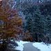 Die Bäume am Weiterweg zum Lautersee sind mit Raureif üerzogen