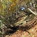 wunderbarer Aufstieg durch den bunten Herbstwald