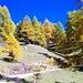Dieser breite Weg führt leicht ansteigend bis kurz unter dem Illgraben Südwestrand und dann wieder hinab nach Chandolin