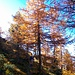 Am Höhenweg zur Cabane de l'Illhorn I