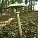 Die Pilzsaison hat auch in der Oststeiermark begonnen.
