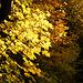 So schön kann der Herbst auch im Jura sein