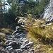 Vegetation, Weg und Fels ähnlich wie im Wallis