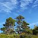 Schöne Bäume & schöne Wolken