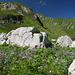 Blumenpracht bei der Hochgletscher Alpe