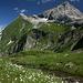 bei der Hochgletscher Alpe mit Blick zur Mohnenfluh
