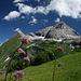 tolles Licht, Blumen und Berge