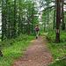 Lärchenwald bei Gspon