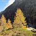 Autunno in Val Marcri