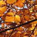 Herbstlicher Wald II