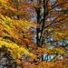 Herbstlicher Wald III