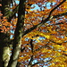 Herbstlicher Wald IV