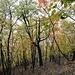 ... geht es im tollen lichten Wald abwärts
