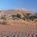 Sandrippeln, Wüstenpflanzen und beissender Wind über den Dünenkämmen